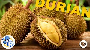 video why durian is the smelly u0027king of fruits u0027