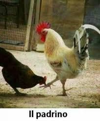 imagenes para pc chistosas imagenes graciosas de gallinas y pollos imagenes re chistosas