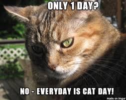 Feel The Love Meme - national cat day feel the love meme on imgur