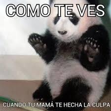 Memes De Pandas - top memes de panda en español memedroid