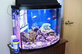 Aquarium Decorations Cheap Realistic Fish Tank Decoration Ideas Tedxumkc Decoration