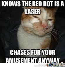 Cat Facts Meme - inspirational cat facts meme good cat memes image memes at