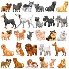 Types Of Dogs Dog Breeds Dogs For Sale Jet Ski Tour Saint Barts