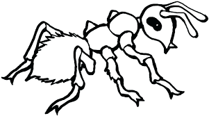 free printable insect coloring pages insect coloring pages for