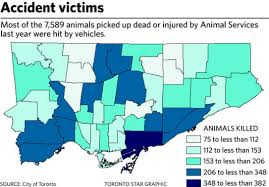 City Of Kitchener Garbage Collection by Road Kill 3 000 Raccoons 1 300 Cats And More Are Casualties Of