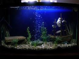 30 best aquarium décor using freshwater images on
