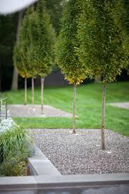 modern plants for landscaping landscape garden trends