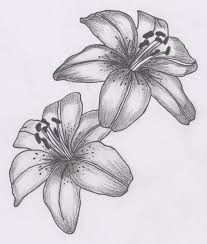 flower opening pencil and in color flower