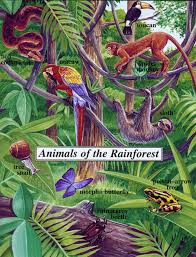 Adaptations Of Tropical Rainforest Plants - endangered animals in the rainforest owlcation