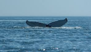 bluewater entertainment chatham cape cod fishing whale