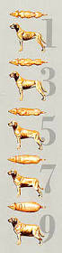 belgian shepherd weight chart german shepherd weight chart