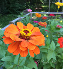 tennessee native plant society zinnias the garden bench