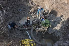michigan farmer digs up woolly mammoth bones in field history in