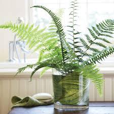 Best Plants For Bathrooms Plants For Bathrooms Home Design