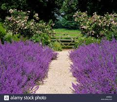 garden path edging stockfotos u0026 garden path edging bilder seite