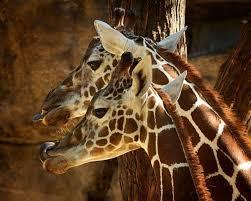 the 25 best safari home decor ideas on pinterest safari nursery