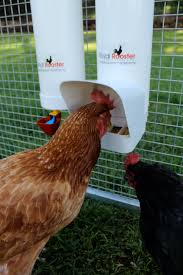 do chicken coops attract mice and rats royal rooster blog