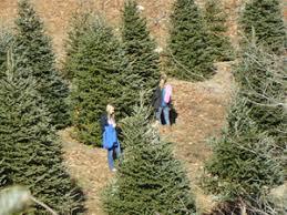 nc tree farms nc mountain log cabin rental