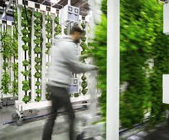 appropriate vertical farming technology powered by zipgrow