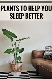 12 plants for your bedroom that will improve sleep quality and