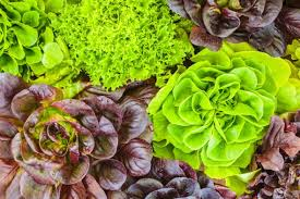 What To Plant In Spring Vegetable Garden by 10 Vegetables To Plant In Spring To Kickstart Your Garden