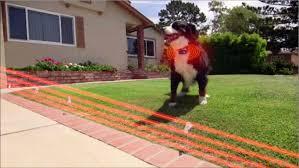 bluetooth electronic fence remote trainer u0026 bark control collar