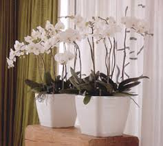 home interior plants home interior plants tropical plants mediterranean plants