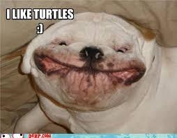 I Like Turtles Meme - i like turtles picture images