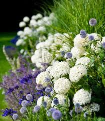 get 20 hydrangea landscaping ideas on pinterest without signing