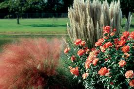 ornamental envy arkansas gardener web articles
