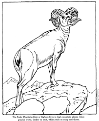 big horn sheep coloring pages zoo animals