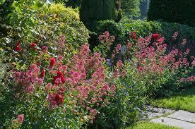 long blooming perennial flowers