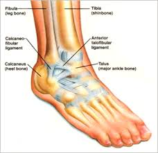 Anterior Tibiofibular Ligament Injury Ankle Sprains Issaquah Foot U0026 Ankle Specialists