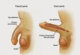 ramuan herbal gangguan fungsi sexual pria pasti sembuh syarat