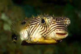 South Carolina wild animals images Animals south carolina aquarium jpg