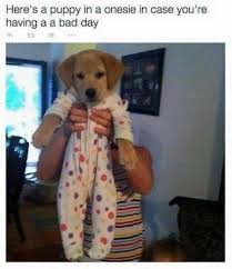 Having A Bad Day Meme - dopl3r com memes heres a puppy in a onesie in case youre