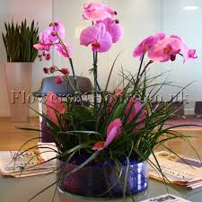 orchid delivery new inspiring selection of flower arrangements from uk flower