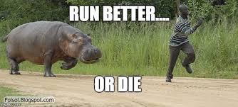 Hippo Memes - hippo chasing man memes imgflip