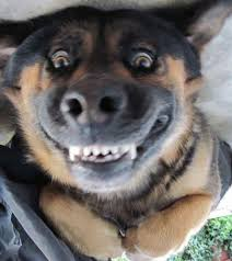 Funny Dog Face Meme - funny dog face blank template imgflip
