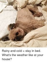 Stay In Bed Meme - rainy and cold stay in bed what s the weather like at your house