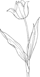 free printable tulip coloring pages for kids
