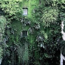 148 best rooftop u0026 vertical gardens images on pinterest vertical
