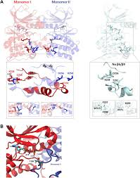 molecular mechanism of aurora a kinase autophosphorylation and its