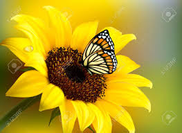 yellow sunflower with a butterfly vector royalty free cliparts
