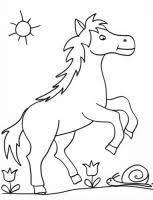 coloriage du squelette d u0027un cheval sur tête à modeler