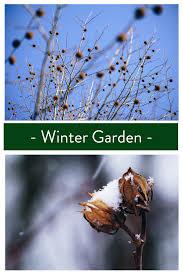 winter garden best winter plants for your winter garden glover