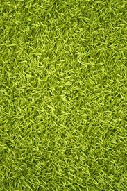 Green Area Rugs Noble House Woven Lime Green Area Rug Reviews Wayfair