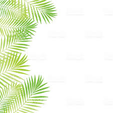 summer tropical palm tree leaves border frame background vector