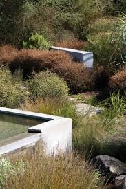 plants native to new zealand 19 best new zealand design images on pinterest native gardens