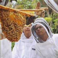 Harvesting Honey From A Top Bar Hive Beekeeping Like A Langstroth Vs Top Bar Hive
